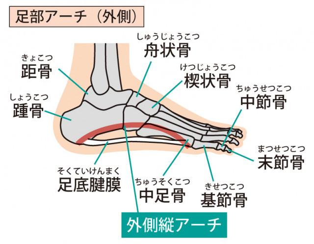足部のイラスト