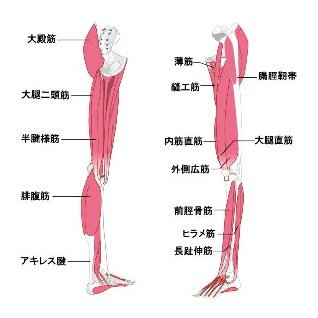 変形性膝関節症へのアプローチ
